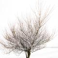 The Tree by Svetlana Sewell