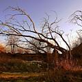 The Twilight Tree by Sophia Shine