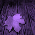 The Violet Leaf by Ninna