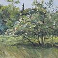 The Wild Apple Tree by Francois Fournier