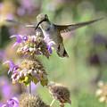 The Wonder Of Wings  by Saija  Lehtonen