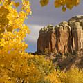 The Yellow Leaves Of Fall Frame A Rock by Ralph Lee Hopkins