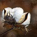 Them Cotton Bolls by Kathy Clark