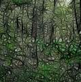 Thoreau Woods Fractal by Lawrence Christopher