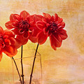 Three Orange Dahlias by Rebecca Cozart