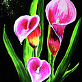 Three Pink Calla Lilies. by Patricia L Davidson
