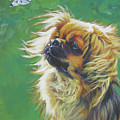 Tibetan Spaniel And Cabbage White Butterfly by Lee Ann Shepard