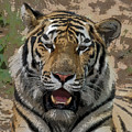 Tiger Abstract by Ernie Echols