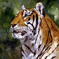 Tiger Alert by Silvia  Duran