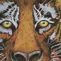 Tiger Eyes by Patricia R Moore