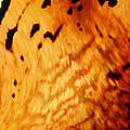 Tiger Eyes by Tim Dangaran