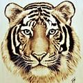 Tiger by Ilaria Andreucci