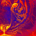 Tiger On Fire by Mayhem Mediums