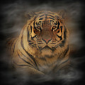 Tiger by Sandy Keeton