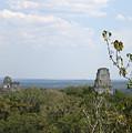 Tikal IIi by Kurt Van Wagner