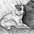 Time Out - Jack Russell Dog Print by Kelli Swan
