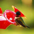 Tiny Feathers by Lori Tambakis
