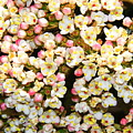 Tiny Flowers by Patrick  Short