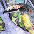 Toucan Bird Tropical Painting Fine Modern Art Print by Derek Mccrea