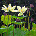 Touching Lotus Blooms by John Lautermilch