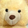 Toy Bear-0089 by Sean Shaw