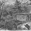 Trapping Wild Turkeys, 1868 by Granger