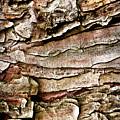 Tree Bark Abstract by  Onyonet  Photo Studios