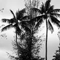 Tree Between The Trees by Deborah  Crew-Johnson