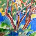 Tree Burst by Patricia Bigelow