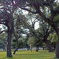 Tree Dance by Edward Ruth