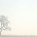Tree In Morning Fog by Steve Somerville