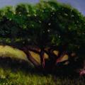 Tree by John Busuttil Leaver