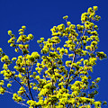 Tree Next Door Ae 3 by Lyle Crump