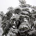 Tree-sicle by Faith Harron Boudreau
