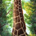 Tree Top Browser by June Hunt