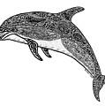 Tribal Dolphin by Carol Lynne