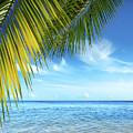 Tropical Beach by Carlos Caetano