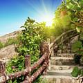 Tropical Garden by MotHaiBaPhoto Prints
