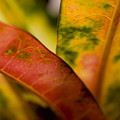 Tropical Leaf Abstract by Ray Laskowitz - Printscapes