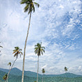 Tropical Palms by Galeria Trompiz