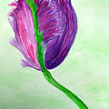 Tulip1 by Sandy Wager