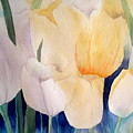 Tulips by Lisa Schorr