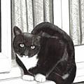 Tuxedo Cat Sitting In Window by Joshua Hullender