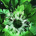 Twisted Leaves by Joan  Minchak