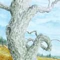 Twisted Tree by Steve Mountz