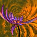 Twisted Waterlily by Jouko Lehto