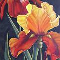 Two Fiery Iris by Silvia Philippsohn