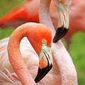 Two Flamingoes by Carlos Caetano