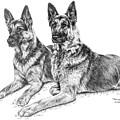 Two Of A Kind - German Shepherd Dogs Print by Kelli Swan