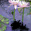Two Pink Lilies In The Rain by John Lautermilch